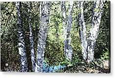 Pond Reflection Acrylic Print by Perry Woodfin
