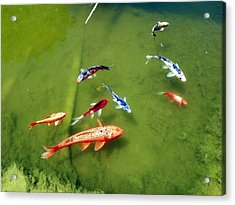 Pond With Koi Fish Acrylic Print