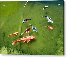 Pond With Koi Fish Acrylic Print by Joseph Frank Baraba