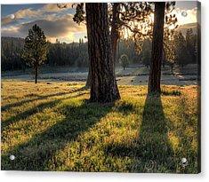 Ponderosa Pine Meadow Acrylic Print by Leland D Howard
