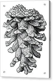 Ponderosa Pinecone Acrylic Print by Kirsten Wahlquist