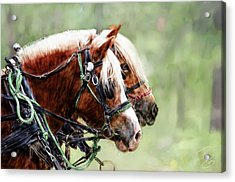 Ponies In Harness Acrylic Print