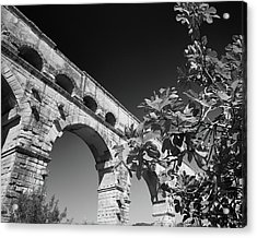 Pont Du Gard And Fig Tree Acrylic Print
