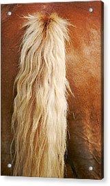 Pony Tail Acrylic Print