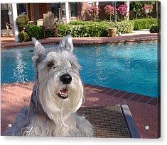 Pooch At Poolside Acrylic Print by Diane Ferguson