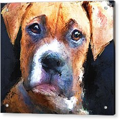 Pooch Acrylic Print by Robert Smith