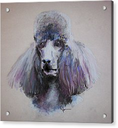 Poodle In Blue Acrylic Print