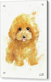 Poodle Puppy Acrylic Print