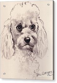 Poodlepup Acrylic Print by Val Stokes