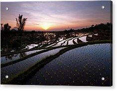 Pools Of Rice Acrylic Print