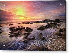 Pools Of Seashells Acrylic Print by Debra and Dave Vanderlaan