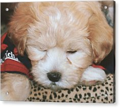 Acrylic Print featuring the photograph Pooped Pup by Diane Merkle