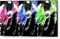 Pop Art Goats Trio - Sharon Cummings Acrylic Print by Sharon Cummings