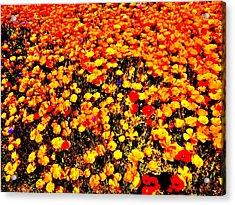 Pop-art Plants Acrylic Print by Nik Watt