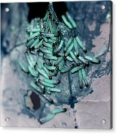 Acrylic Print featuring the photograph Pop Macro No. 1 by Laura Melis