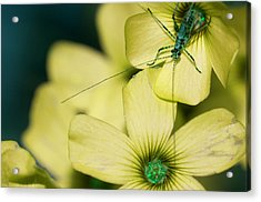 Acrylic Print featuring the photograph Pop Macro No. 2 by Laura Melis