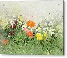 Poppies-2-c Acrylic Print