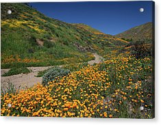 Acrylic Print featuring the photograph Poppies Along Riverbed by Cliff Wassmann