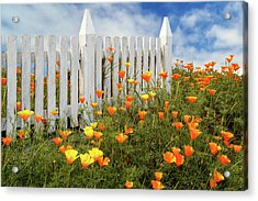 Acrylic Print featuring the photograph Poppies And A White Picket Fence by James Eddy