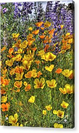Acrylic Print featuring the photograph Poppies And Lupines by Jim and Emily Bush