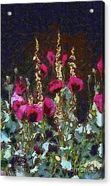 Poppies And Verbascum Acrylic Print by Shirley Stalter