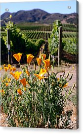 poppies and Vines Acrylic Print