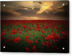 Poppies At Sunset Acrylic Print by Albena Markova