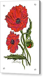 poppies by June Pressly Acrylic Print by June Pressly