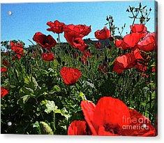 Poppies. Acrylic Print by Don Pedro De Gracia