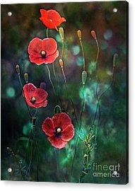 Poppies Fairytale Acrylic Print