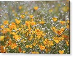 Acrylic Print featuring the photograph Poppies Fields Forever  by Saija Lehtonen