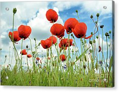 Poppies In Field Acrylic Print