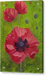 Poppies Acrylic Print by Laurel Ellis