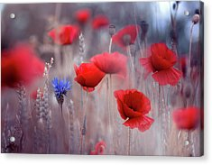 Poppies Acrylic Print by Magda Bognar
