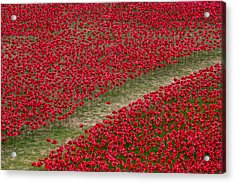 Poppies Of Remembrance Acrylic Print by Martin Newman