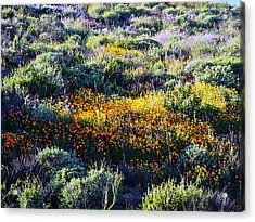 Acrylic Print featuring the photograph Poppies On A Hillside by Glenn McCarthy Art and Photography