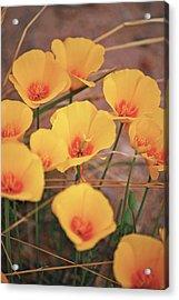 Poppies On Mount Lemmon Acrylic Print