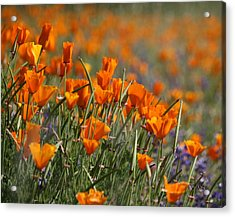 Acrylic Print featuring the photograph Poppies by Patrick Witz