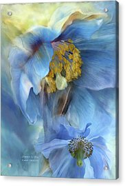 Poppies So Blue Acrylic Print by Carol Cavalaris