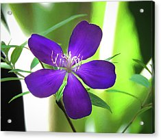 Poppin Purple Flower Acrylic Print by Penny Lisowski