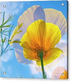 Poppy And Sun Acrylic Print by Veikko Suikkanen