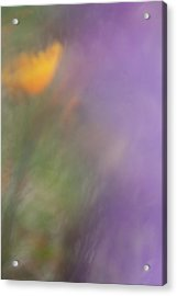 Acrylic Print featuring the photograph Poppy And Purple Lupine by Roger Mullenhour
