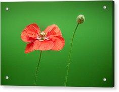 Poppy Acrylic Print by Bulik Elena