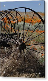 Poppy Farm Acrylic Print by Ivete Basso Photography