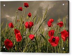 Poppy Field Before The Storm Acrylic Print by Floriana Barbu