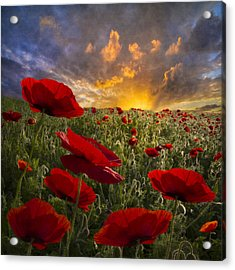Poppy Field Acrylic Print by Debra and Dave Vanderlaan