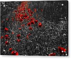 Poppy Field Acrylic Print by Svetlana Sewell