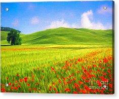Poppy Field Acrylic Print by Veikko Suikkanen