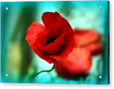 Poppy Flower Acrylic Print by Emanuel Tanjala