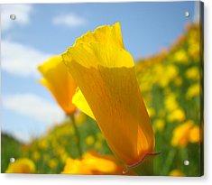 Poppy Flowers Meadow 3 Sunny Day Art Blue Sky Landscape Acrylic Print by Baslee Troutman